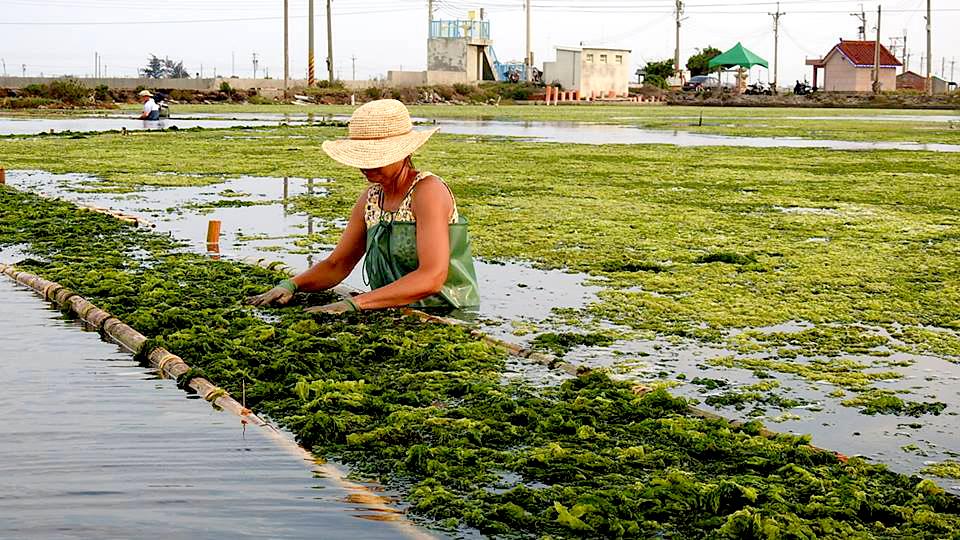 annechien alg.jpg