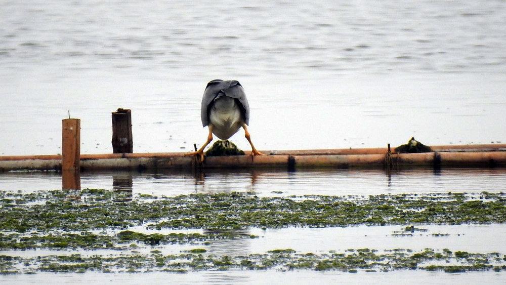 Vogelkont.jpg