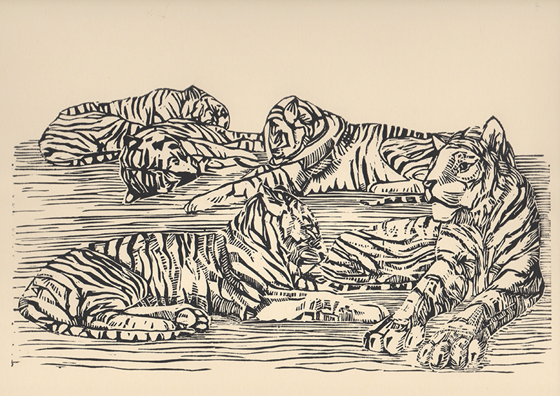 5 Tigers. Lino cut print on paper. 28,70 x 15,50 cm.