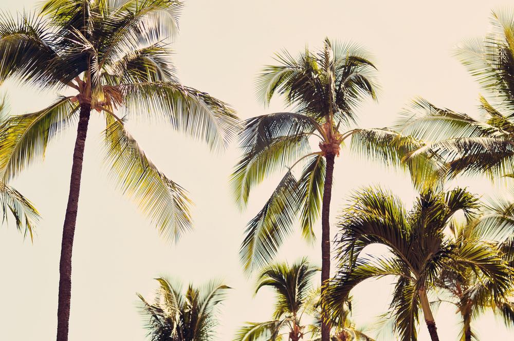 Maui_Family_Portriats023.jpg