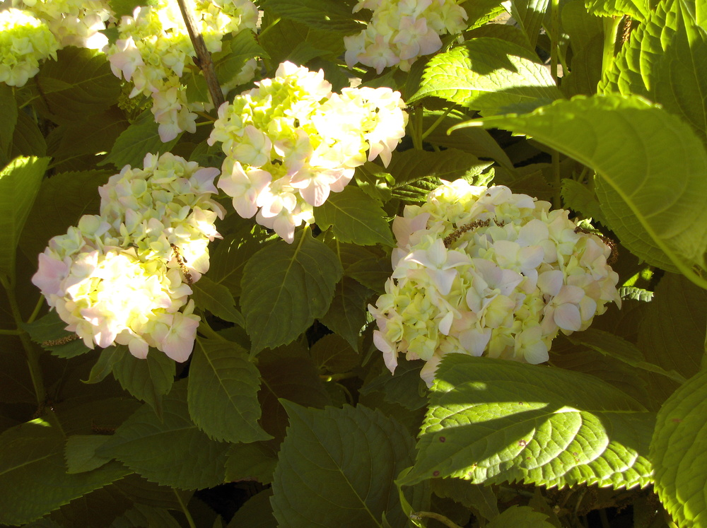 Garden Jun 09 (9).JPG