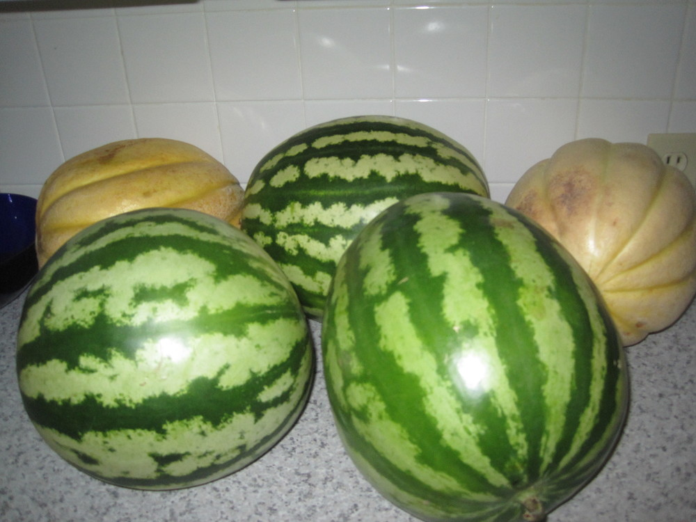 Webber's Falls melons summer 2011 (1).jpg