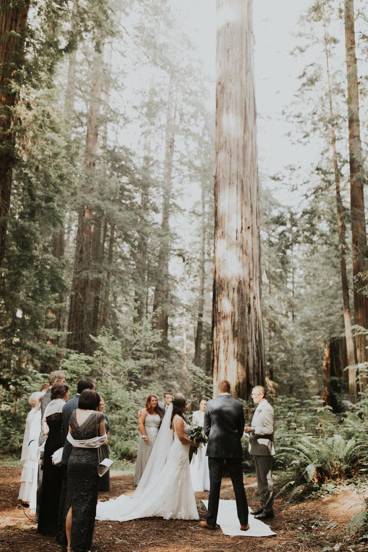 Megan + Alex Elopement in the Redwoods