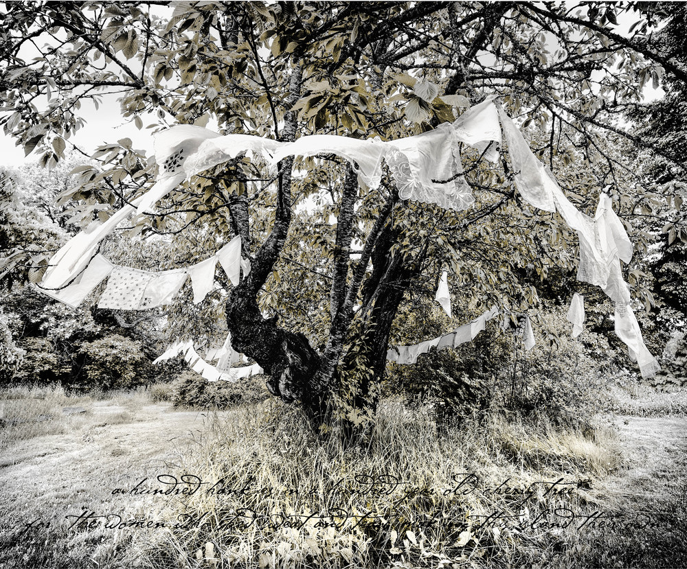A HUNDRED HANKIES   'a hundred hankies in a hundred year old cherry tree for the women who shed sweat and tears making this island their own'       16 x 20 print Limited Edition of 10