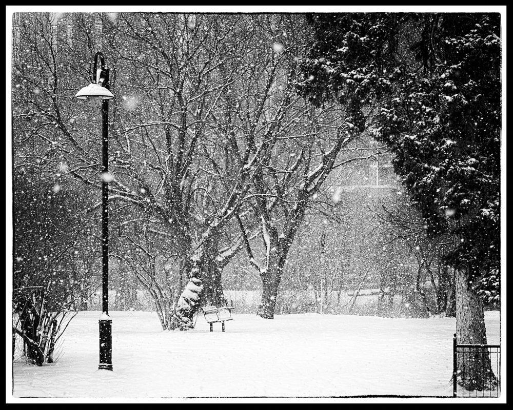 Winter Trees/Series of 12