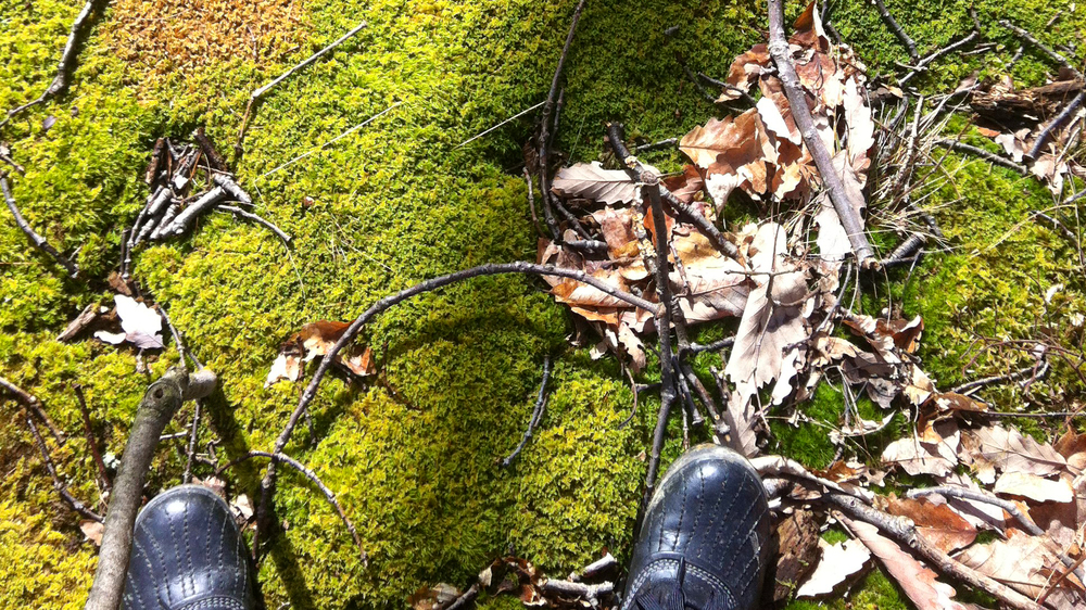 Glorious moss in Taconic National Forest, 2013