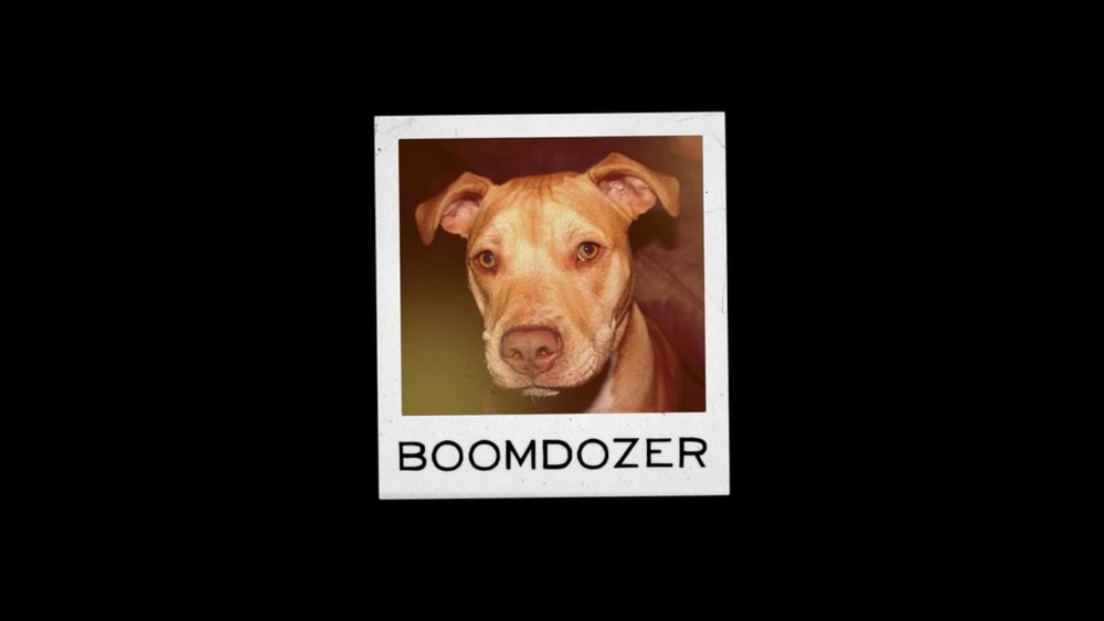 Meet Boomer, aka Boomdozer.       SVP, Development & Crazymaking.