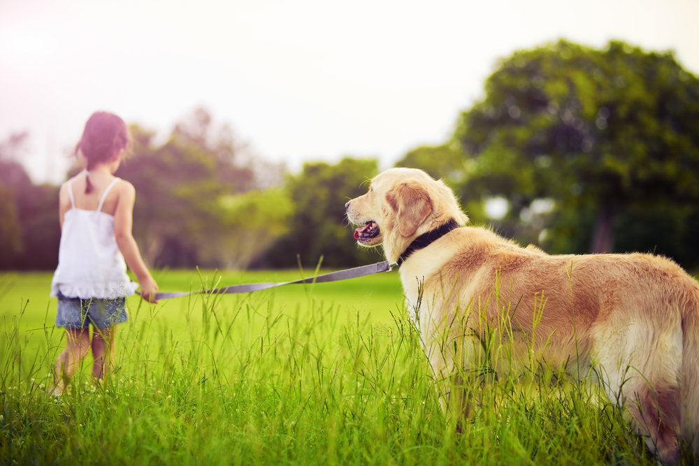 young-girl-with-golden-retriever-walking-away-PDPBRLS.jpg