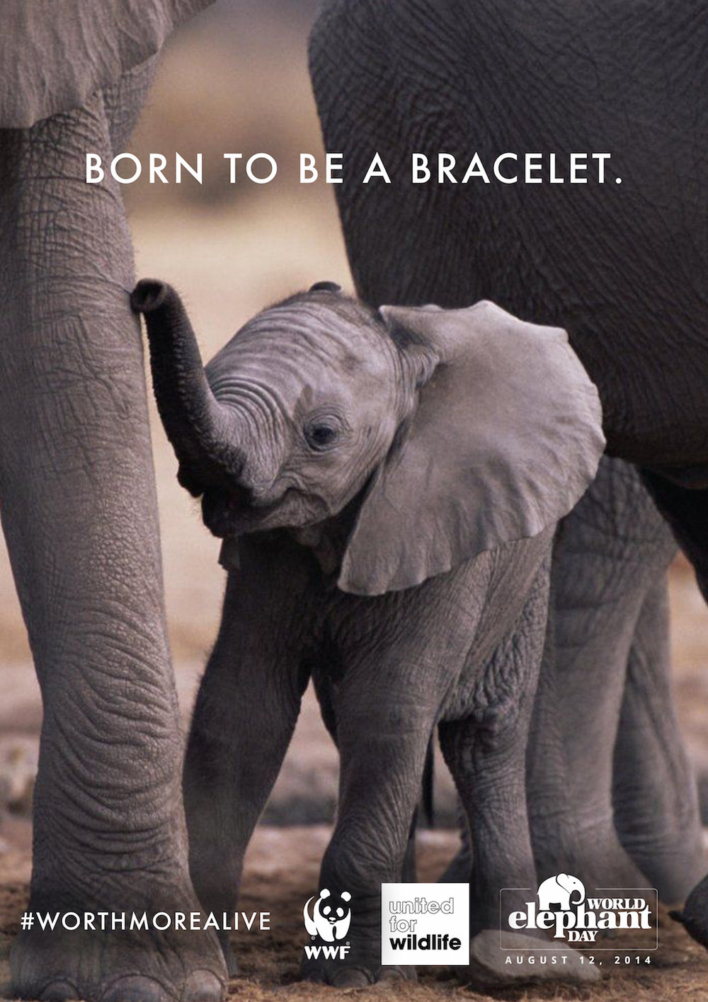 WINNER   BRIEF:  WORLD ELEPHANT DAY
