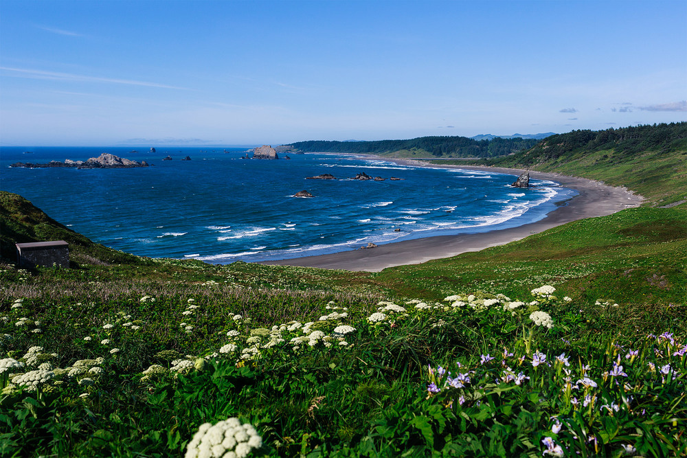 Field of wild flowers leading to the beach at Cape Blanco, Oregon