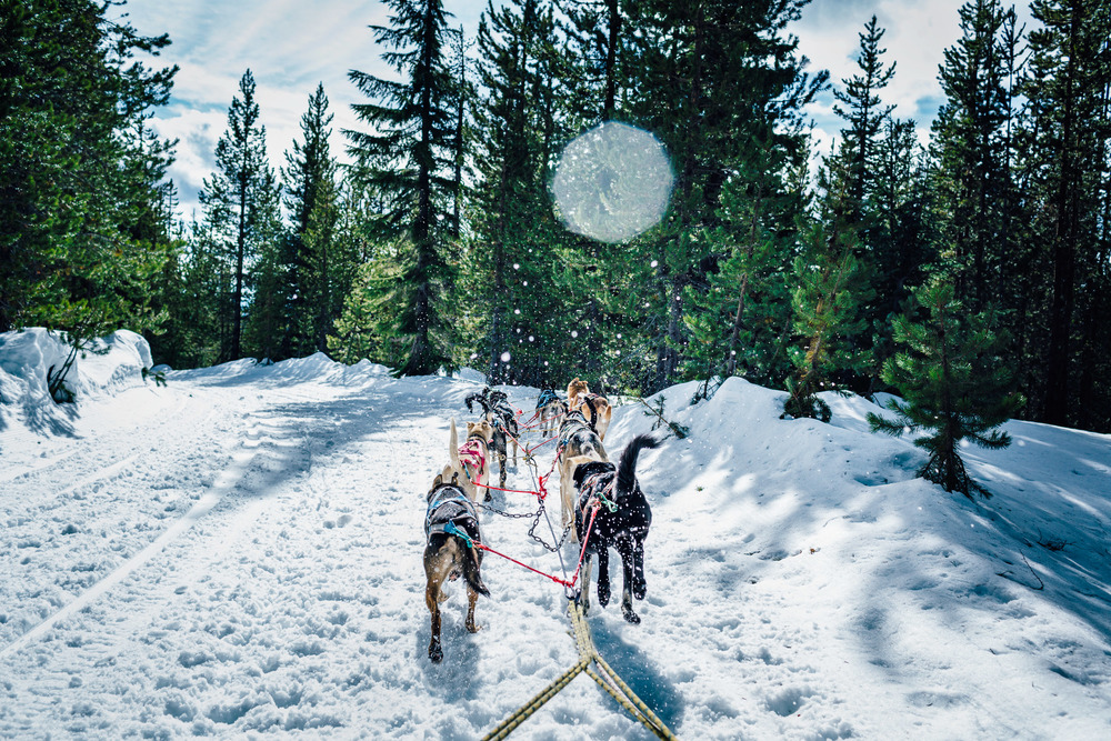 Flying snow from the sled dogs on the trail near Mt Bachelor, Oregon