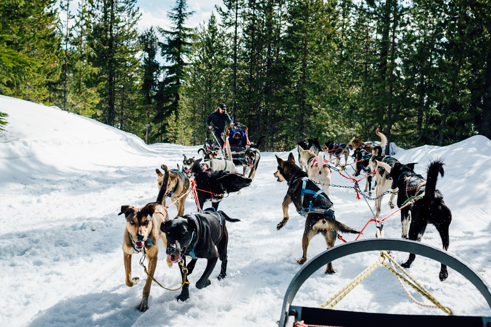 Passing another dog sled along the trial