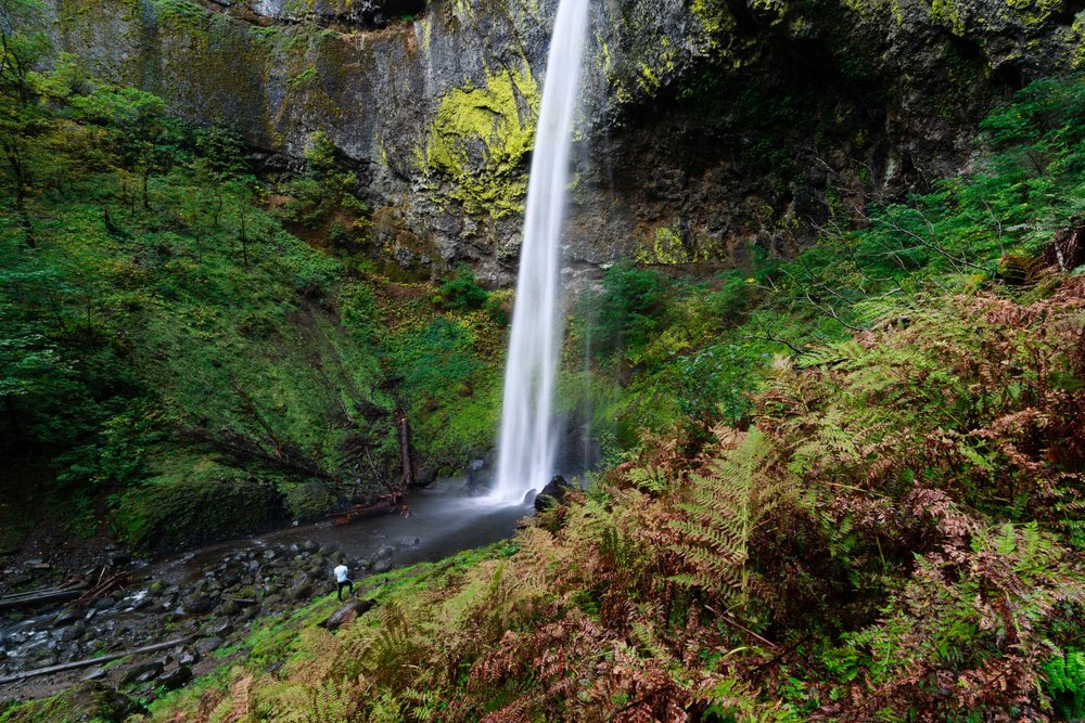Hiker below the 213 ft Elowah Falls as the ferns begin changing color with the changing seasons.