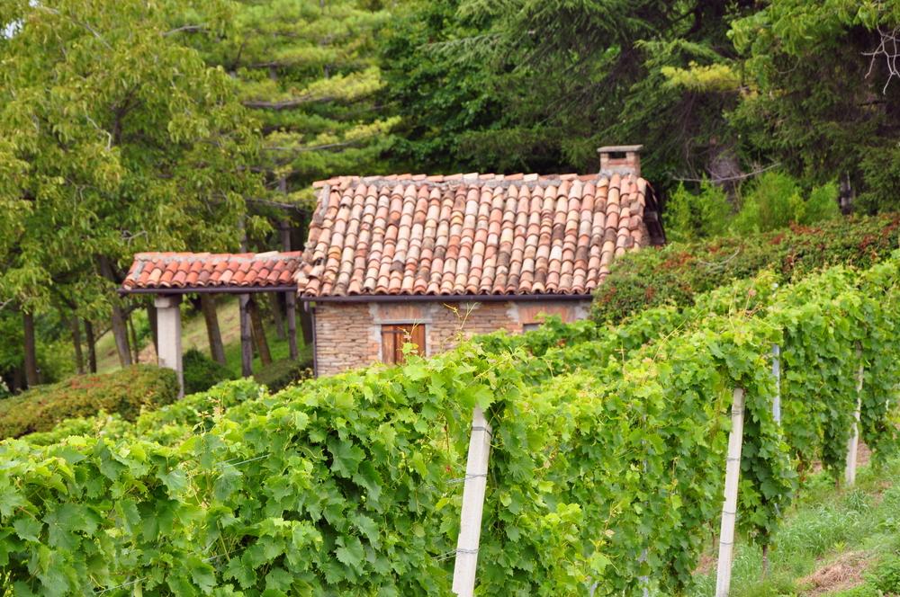 Piemonte Vineyard