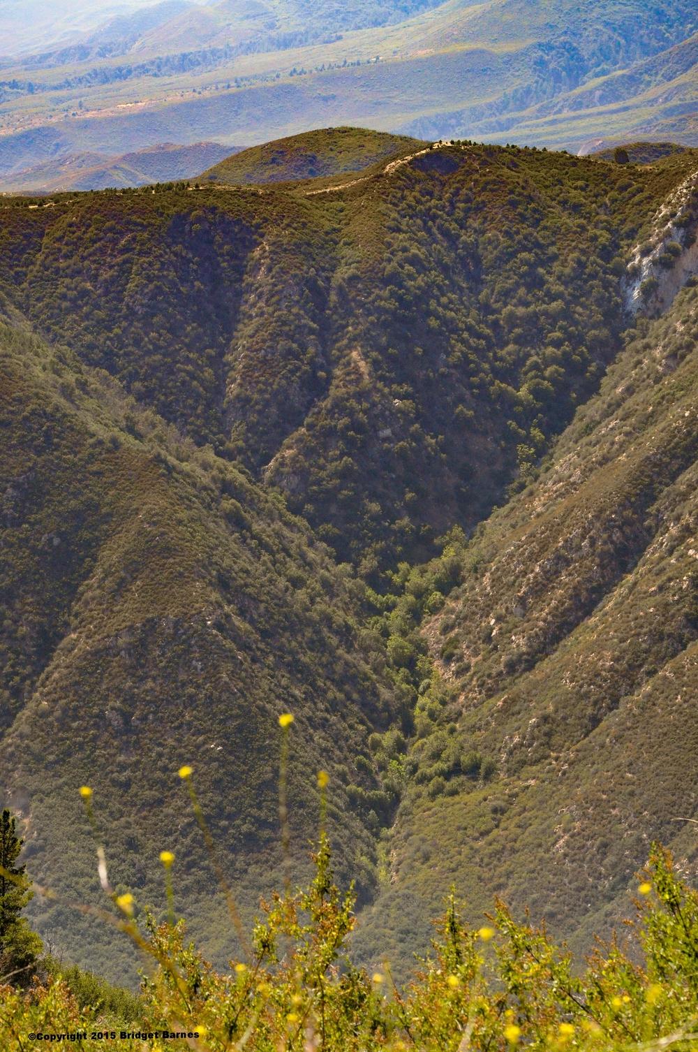 San Bernardino Mountains  ©Copyright 2015 Bridget Barnes
