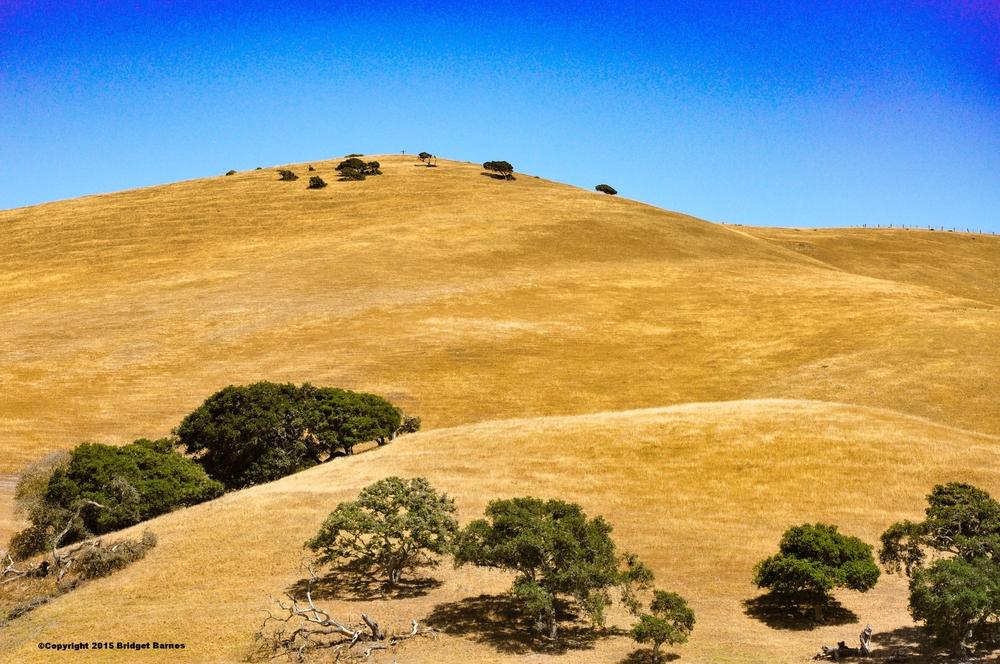 Somewhere Between Salinas and Los Angeles  ©Copyright 2015 Bridget Barnes