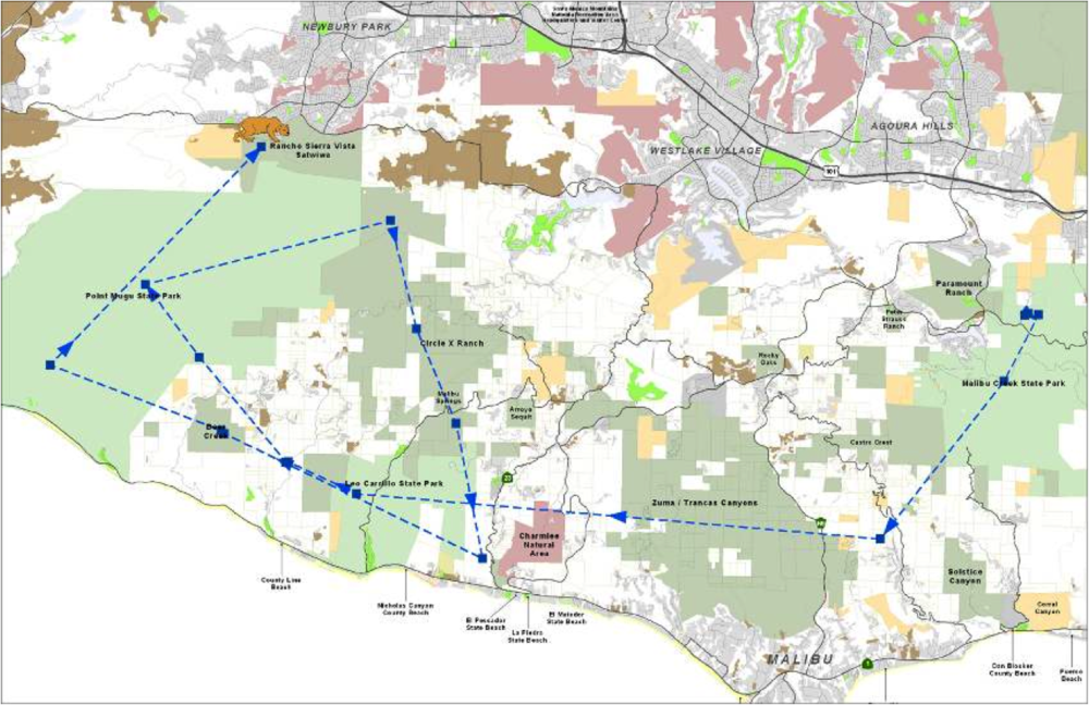 A map of P05's dispersal after his mother, P02, was killed by P01. P05 moved to the western end of the Santa Monica Mountains around Point Mugu State Park where he lived until he was killed by his father, P01.