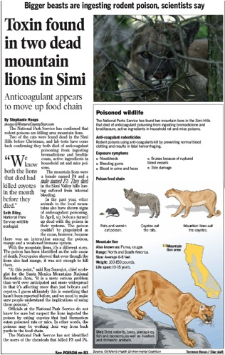 A Ventura County Star article highlighted the effects of anticoagulants on two local mountain lions.  The lions died directly of anticoagulant rat poison toxicity and were thought exposed to the poisons from consuming coyotes that were exposed to the poisons.  This suggests tertiary exposure rather through the secondarily exposed coyotes.