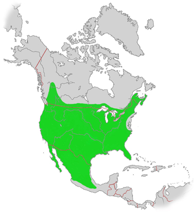 Current distribution map of bobcats. Green indicates distribution.