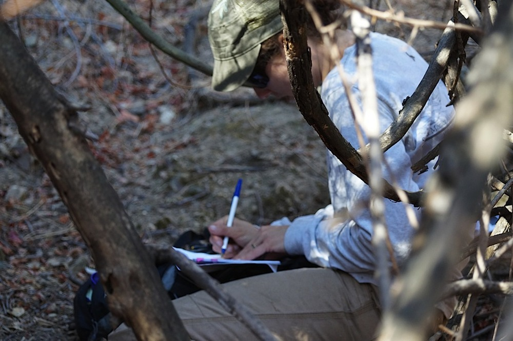 Laurel recording data at the second kill site.