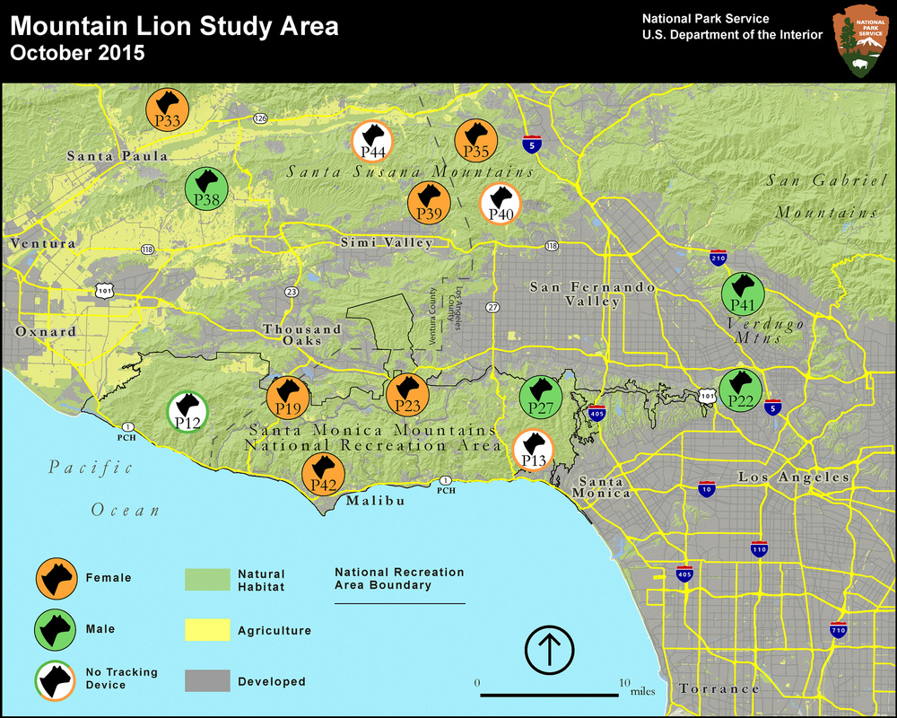 As of October 2015, these are the mountain lions that are being tracked by National Park Service biologists. Map credit: National Park Service