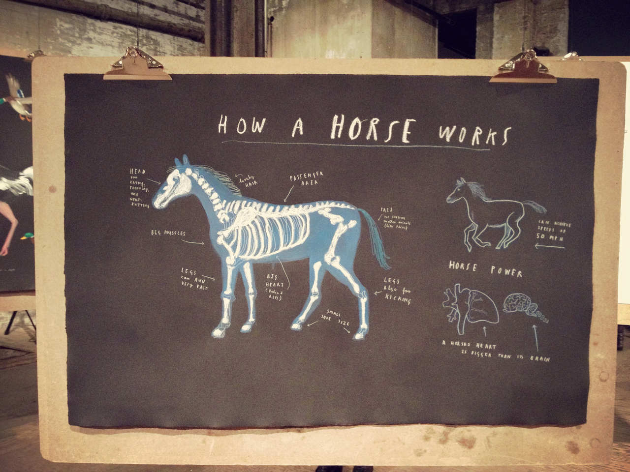 How a horse works by Mul Holland Hwang #peppersearching #pepper #panting #drawing #clipboard #blackboard
