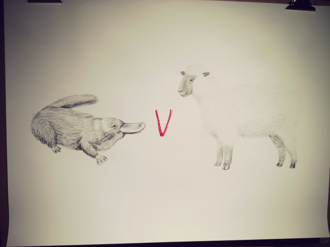Duckbill & Sheep by Mul Holland Hwang #peppersearching #pepper #Drawing #art #brooklyn