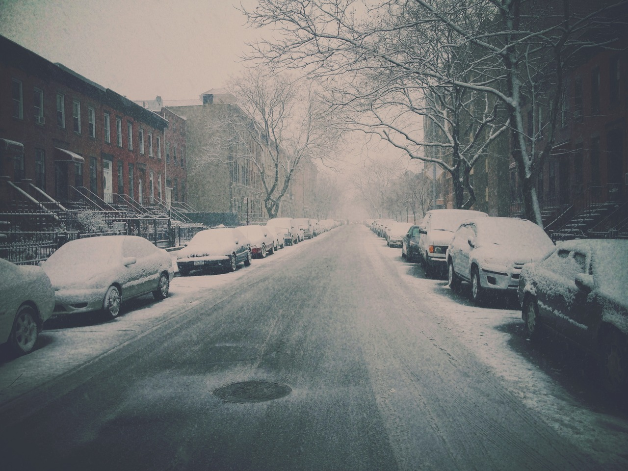 Long Walk For Donuts #peppersearching #pepper #photos #snow #brooklyn #kitkam