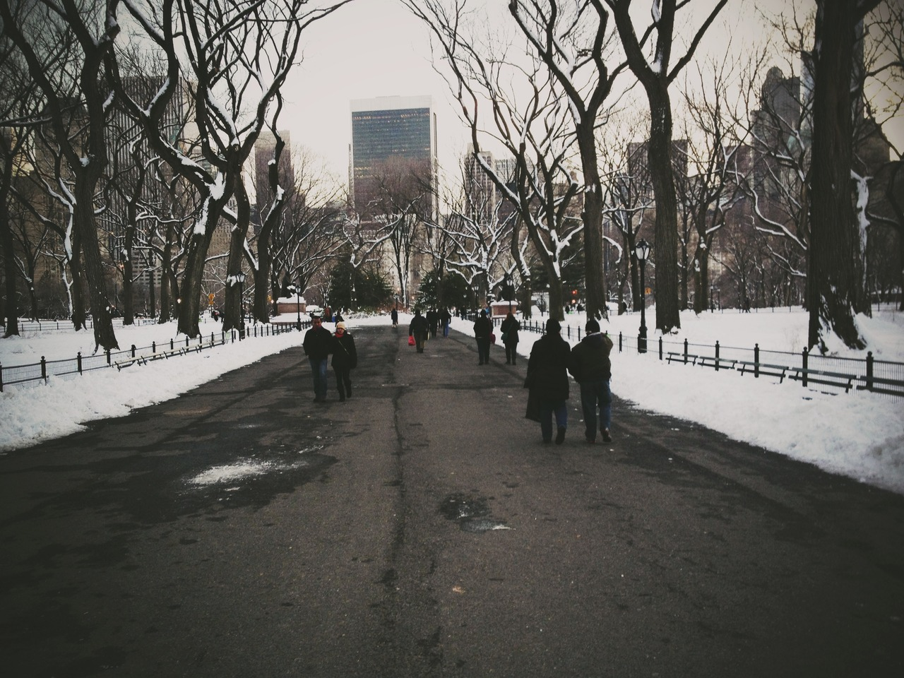 Central Park #peppersearching #pepper #photos #centralpark #snow #nyc #woods