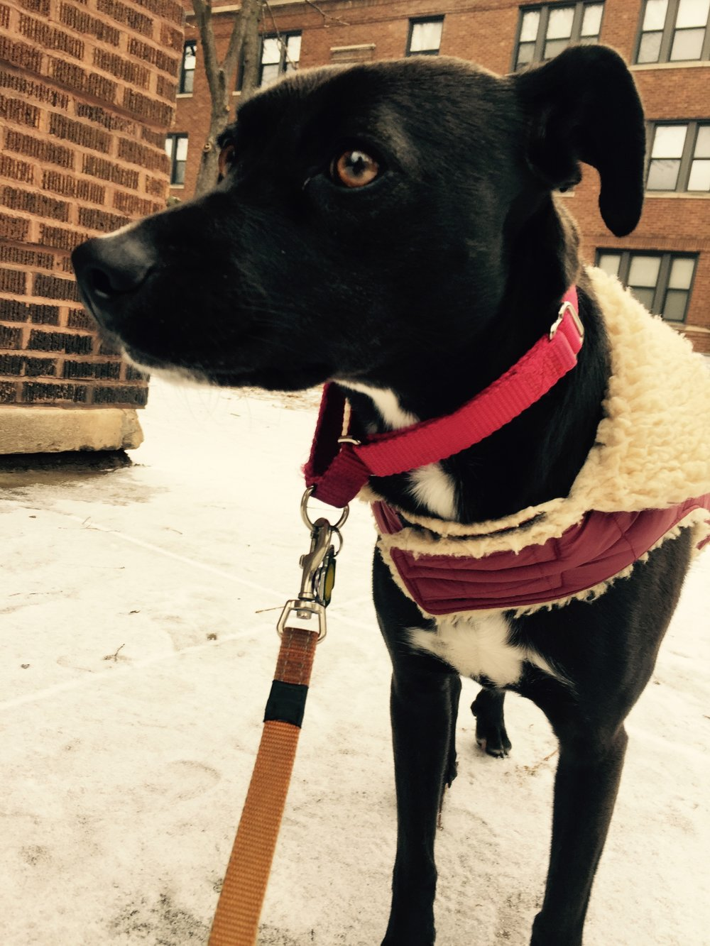 Daisy in the snow with a jacket straight from Abercrombie and Fitch circa 2006.