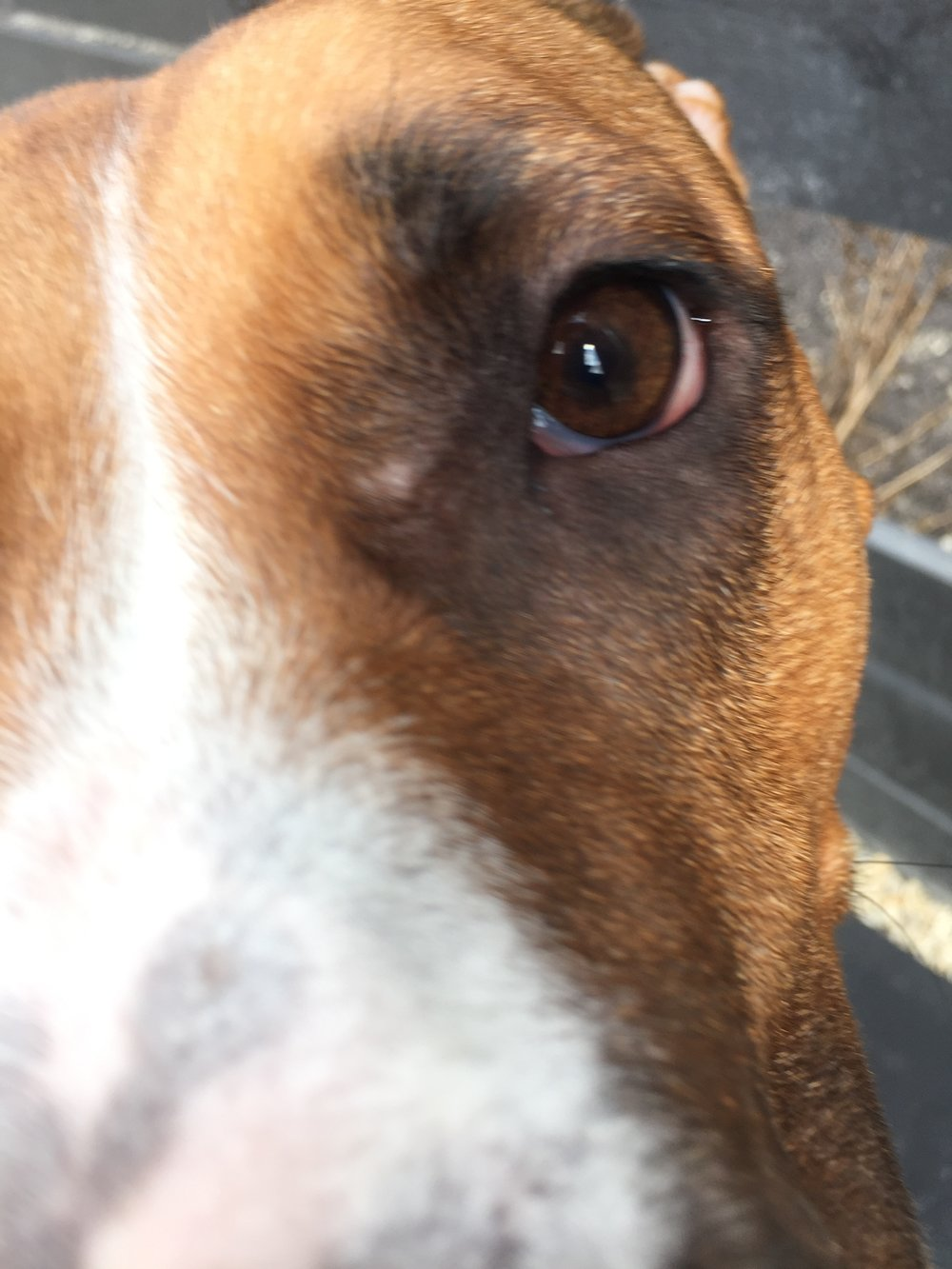 Marge in extreme close up. Easily the most common picture of her that I have.