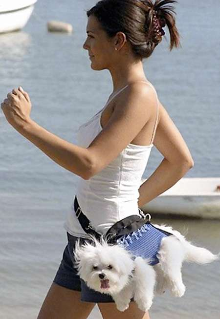 Wrong kind of dog fanny pack.