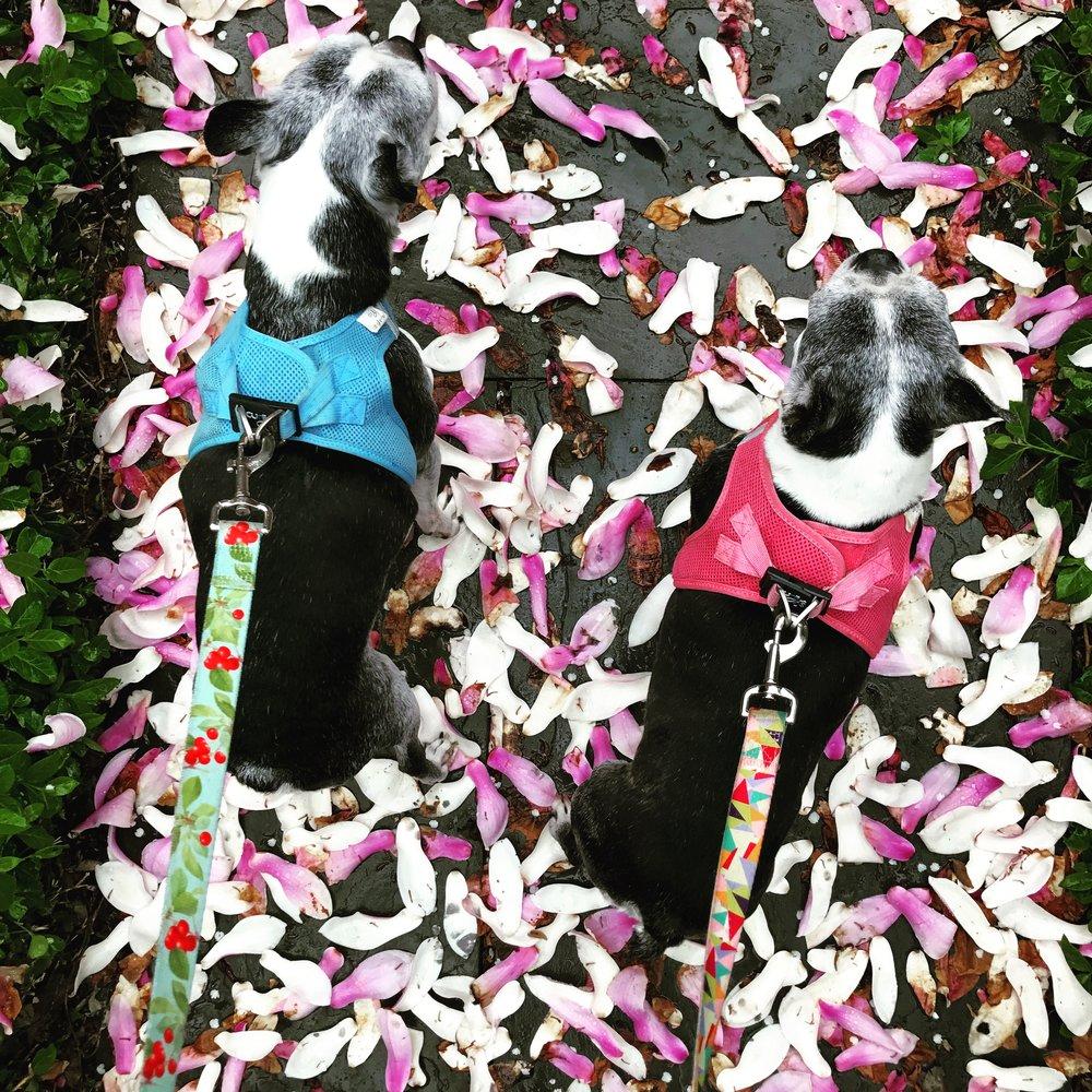 Stella & Tucker,  Paws on Petals,  2017