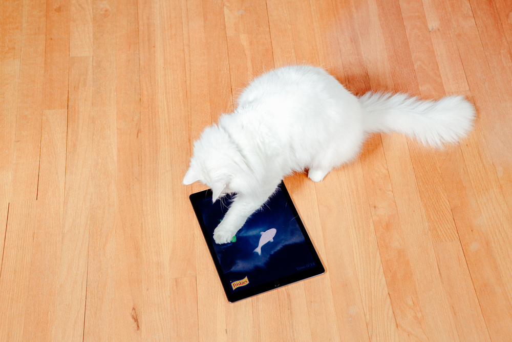 The iPad Pro is a (deaf) cat friendly device.