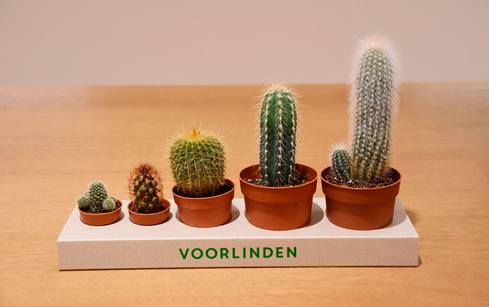 Martin-Creed_cactus.jpg