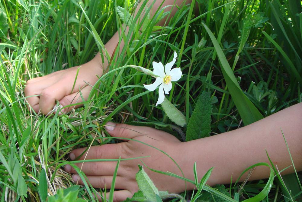 attivita-caleidoscopio-fiori