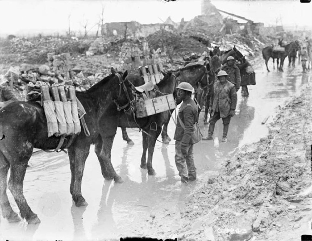 Pack horses taking up ammunition to guns of the 20th Battery, Canadian Field Artillery, near Neuville St. Vaast, April 1917. They are transporting 18-pounder ammunition for field guns. The 100,000 troops assembled for the attack needed food and water daily as did the more than 50,000 horses with them. (dnd, library and archives canada, mikan 3194797)