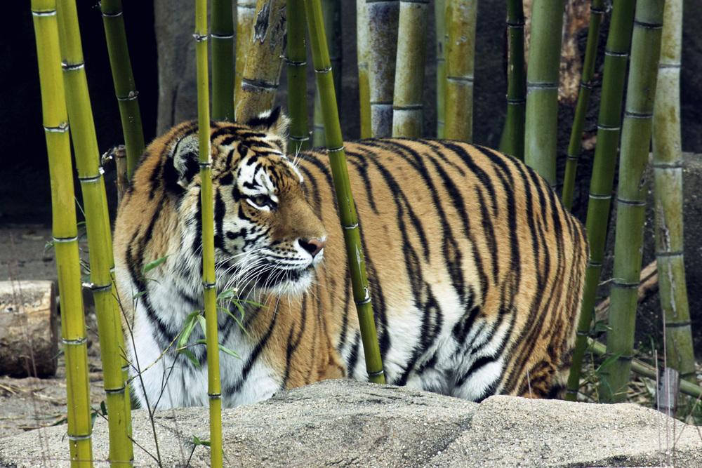 zoo5.jpg