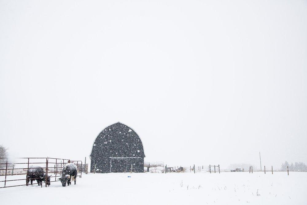 barn and panels.jpg