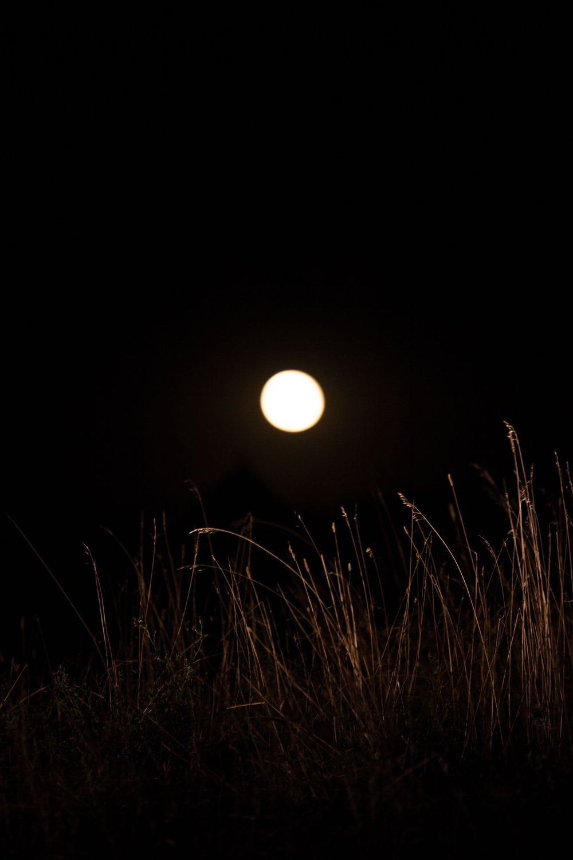 moon grass pipcreek.jpg