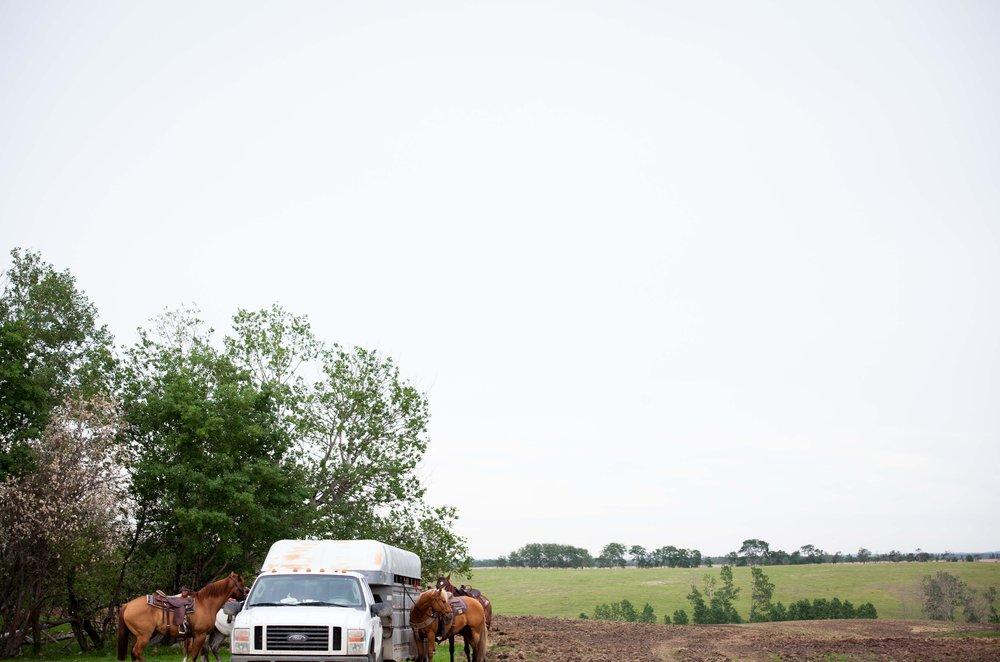horse at trailer.jpg