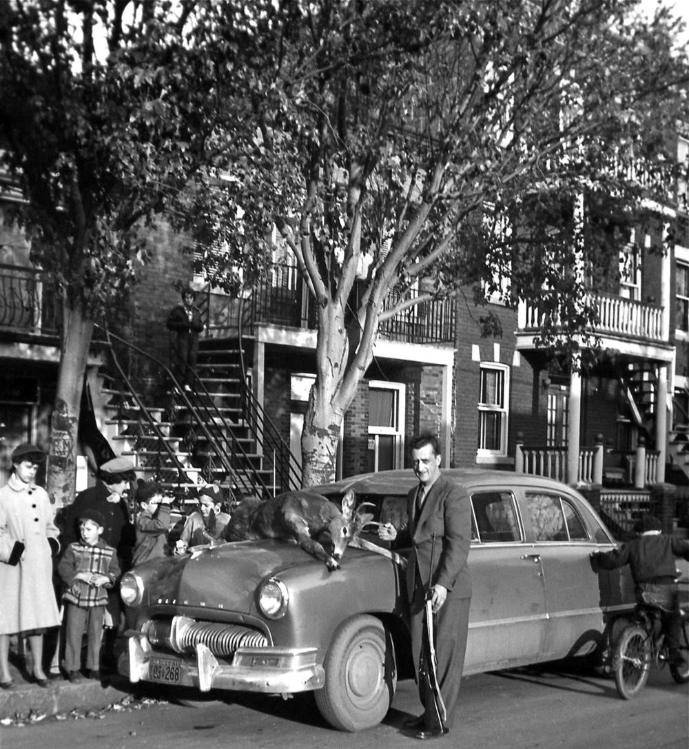 montreal 1954 deer.jpg