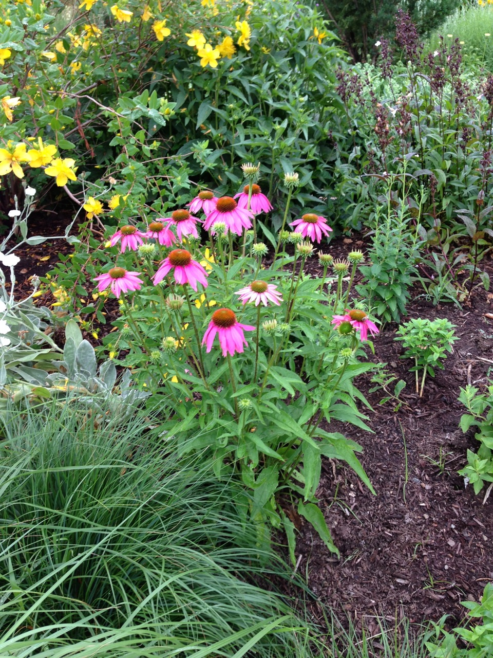 The summer perennial garden will bloom again.
