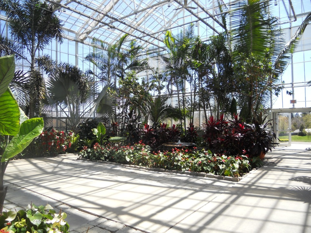 Inside the conservatory. Look carefully and you will see at least two types of palms categorized by fronds. The Bismarck palm is palmate or fan shaped. The others are pinnate or feather-like.
