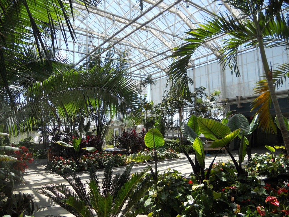 Inside the conservatory. The height of the conservatory is 45 feet at peak