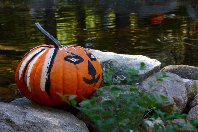 pumpking-painting-2015-DSC_2592.jpeg
