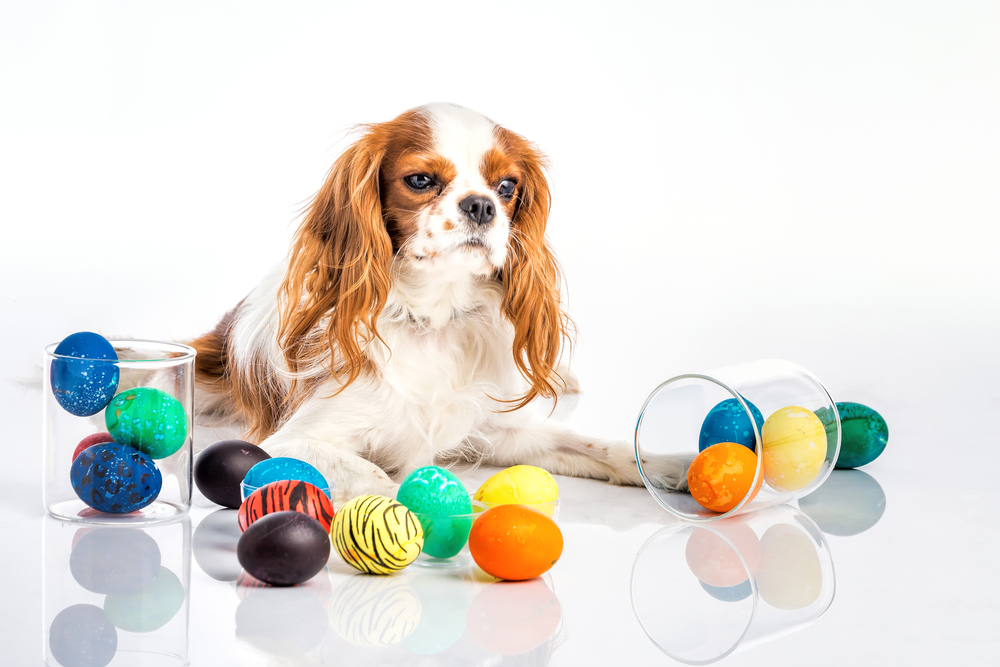 Puppy easter eggs