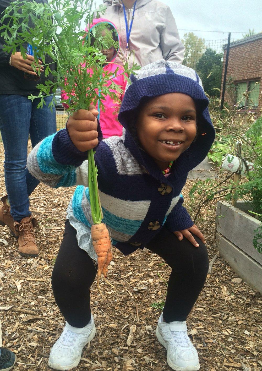 K student harvesting carrot  (1).JPG