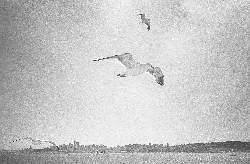 Birds_over_SF.jpg