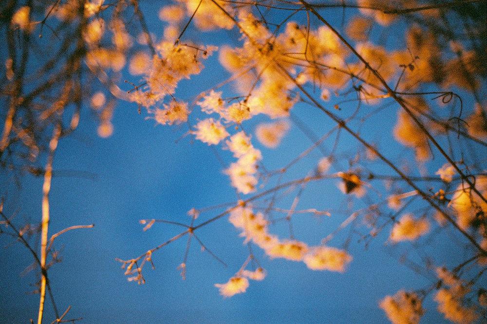 19--Flowers-Before-Sunrise.jpg